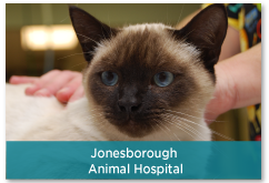 Jonesborough Animal Hospital