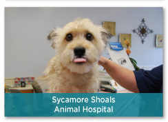 Sycamore Shoals Animal Hospital