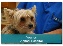 Youngs Animal Hospital